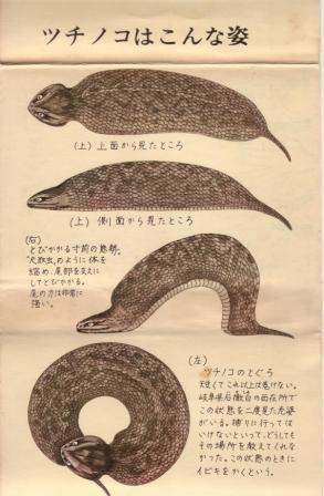 ファイル 2768-3.jpg